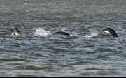Quái vật hồ Loch Ness lại lộ diện?