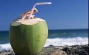 Đó là quả dừa