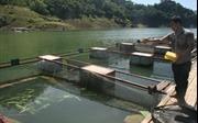Nuôi cá trên hồ Hòa Bình, nhiều hộ nghèo trở nên khấm khá