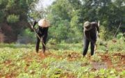 Bất cập trong giải quyết đất cho đồng bào dân tộc thiểu số ở Đắk Lắk