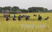 Bão áp sát Quảng Ninh, hàng nghìn bộ đội gặt lúa giúp dân