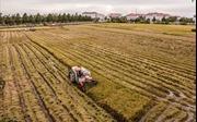 Ứng dụng KHCN vào sản xuất nông nghiệp
