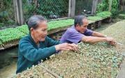Mùa ươm rau giống ở Đại Lộc