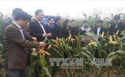 Lào Cai bước vào năm mới 2017 với nền tảng vững chắc