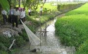 Kinh nghiệm thu 200 triệu đồng/năm từ vườn dừa và cá bột