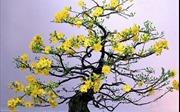 Ý nghĩa của các loài hoa gắn liền với Tết