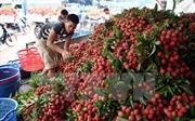 Quy định mới về ghi nhãn xuất xứ thực phẩm được xuất qua thị trường Úc