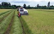 Trăn trở phát triển thương hiệu nông sản