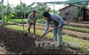 Người phụ nữ Nhật 20 năm gắn bó với nông dân Việt Nam