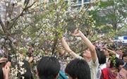 Ngắt hoa, bẻ cành nơi công cộng bị phạt bao nhiêu tiền?