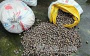 Quảng Ninh tiêu hủy gần 2 tấn thực phẩm không rõ nguồn gốc