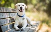 Giống chó nào được yêu chuộng nhất ở Mỹ?