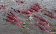 Đánh thức tiềm năng nuôi trồng thủy sản khu vực Tây Bắc