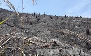 Đắk Nông làm rõ vụ việc 'rừng bị phá nghiêm trọng, chính quyền chậm vào cuộc'