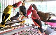 Bắt xe biển kiểm soát Campuchia chở rắn hổ mang chúa và chim vẹt