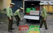 Thu giữ hơn 2.500 con vịt giống nhập lậu từ Trung Quốc