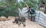 Lai Châu: Nhiều gia đình người Mông tự nguyện xin ra khỏi diện hộ nghèo