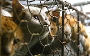 Đài Loan ban hành lệnh cấm ăn thịt chó, mèo