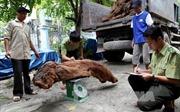 Hà Giang liên tiếp bắt giữ nhiều vụ vận chuyển gỗ quý