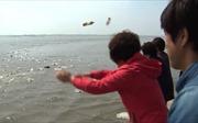 Giữa căng thẳng, những chai gạo Hàn Quốc vẫn lênh đênh tìm đường đến Triều Tiên