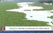 Khó xử lý 'vấn nạn' lục bình bao vây sông Vàm Cỏ