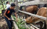 Thực hiện hiệu quả các chính sách dân tộc để giảm nghèo bền vững