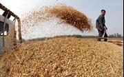 Triều Tiên đẩy mạnh nhập khẩu ngũ cốc từ Trung Quốc
