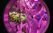 Trung Quốc cho người sống thử nghiệm môi trường Mặt Trăng