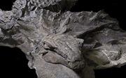 Lần đầu phát hiện hóa thạch 'rồng' nguyên vẹn hình hài