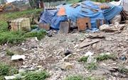 Hưng Yên xử phạt hành vi đổ phế thải trên đê sông Hồng