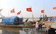 Ngư dân Thanh Hóa bội thu cá trích