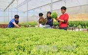 Làm nông nghiệp công nghệ cao để thoát cảnh 'được mùa, mất giá'