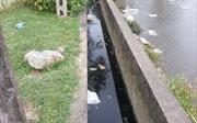 Bị ngập vì hàng xóm chiếm mương thoát nước, làm thế nào?