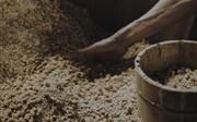 Nấm mốc lên men xì dầu có thể điều trị bệnh Parkinson