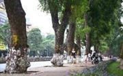 Bí thư Thành ủy Hà Nội Hoàng Trung Hải: Phải trả lời nhân dân rõ ràng về di dời 1.300 cây xanh