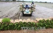 Áp dụng mô hình cấy lúa bằng máy cho năng suất cao