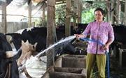 Từ tay trắng trở thành tỷ phú chăn nuôi bò sữa
