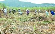 Tìm phương thức ưu việt về tích tụ ruộng đất - Bài cuối: Thay đổi tư duy, chính sách