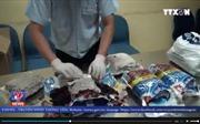 Thu giữ 12 kg cần sa tại sân bay Tân Sơn Nhất