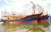 Bộ NN&PTNT báo cáo Chính phủ về chất lượng tàu cá vỏ thép
