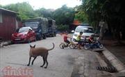 Hoảng hồn với chó không rọ mõm nơi công cộng