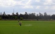 Tính lại bài toán cây lúa ở Tây Nam Bộ