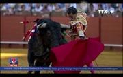 Tranh cãi về môn thể thao đấu bò ở Tây Ban Nha