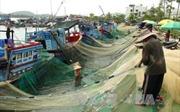 Nhiều nghề khai thác biển đạt hiệu quả cao