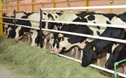 Khủng hoảng vùng Vịnh: Qatar đau đầu giải bài toán 'khát bơ sữa'