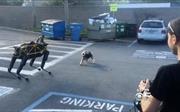 Phản ứng bất ngờ của chó thật khi 'chạm trán' chó robot