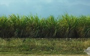 Nga sẽ giúp Cuba hiện đại hóa các nhà máy đường