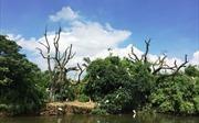 Chọn Côn Sơn cổ kính và Đảo Cò yên bình để khám phá xứ Đông