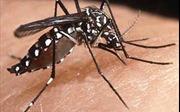Nhận biết và phòng chống muỗi vằn Aedes truyền bệnh sốt xuất huyết