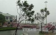 Những hình ảnh về sức tàn phá của cơn bão số 10